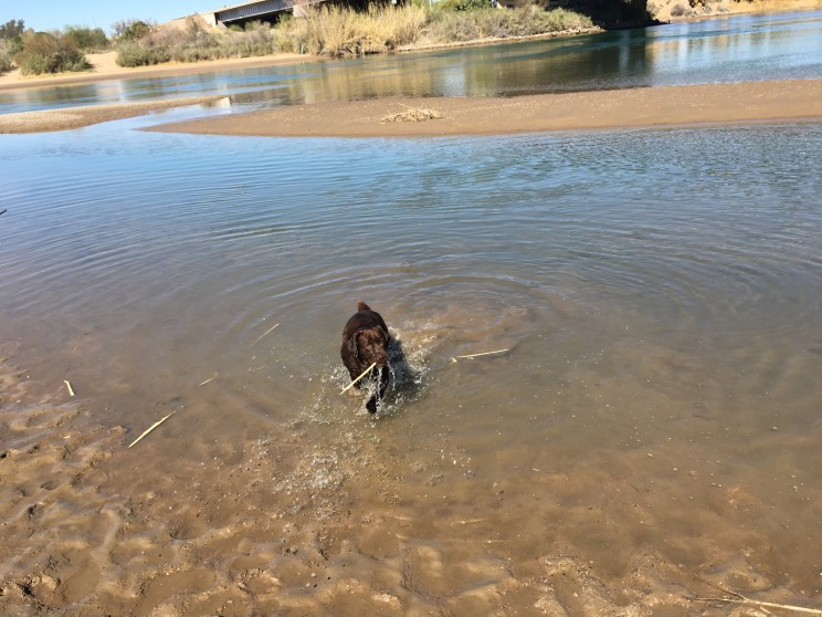 Anton im Colorado River