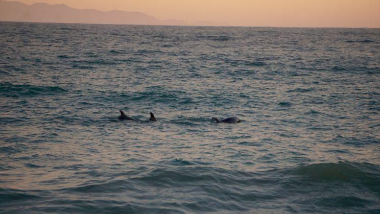 Die Delfine kamen als Rausschmeißer 😉