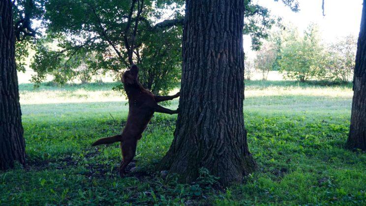 Anton und die Eichhörnchen
