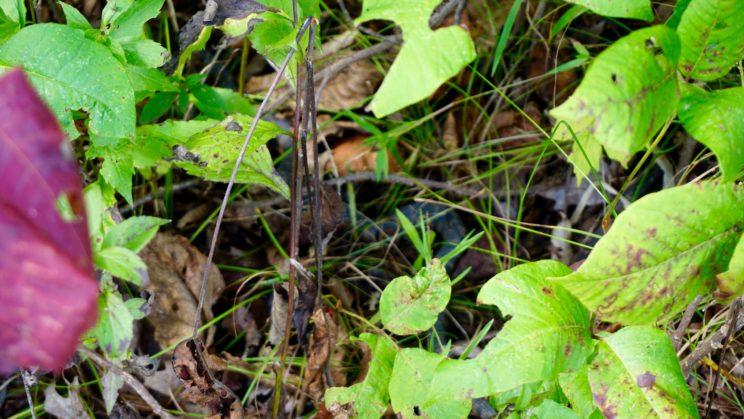 Finde die Schlange(n) - im Halbschatten hatten es auch gleich mehrere gemütlich gemacht